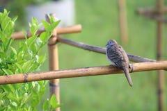 Птица голубя садилась на насест на ветви одичалого дерева в саде Стоковое Изображение