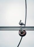 Птица голубя сидит на электрическом электрическом кабеле Стоковые Фото