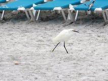 Птица гуляя Стоковые Изображения