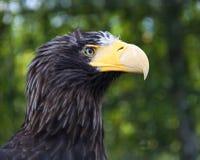 Птица добычи стоковая фотография