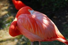птица довольно Стоковое Изображение