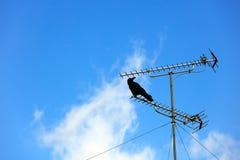 Птица держа дальше столб телевидения на предпосылке голубого неба Стоковые Фотографии RF