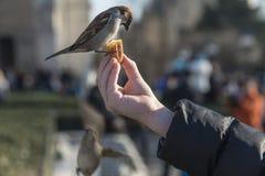 Птица есть от руки ребенка Стоковое Фото