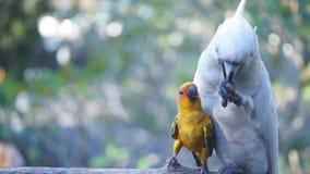 Птица есть хлеб сток-видео
