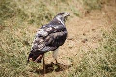 Птица ест змейку Стоковые Изображения