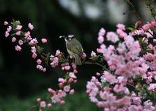 Птица ест листья цветков стоковые фото