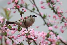 Птица ест листья цветков стоковое изображение rf
