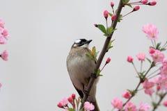 Птица ест листья цветков стоковое изображение