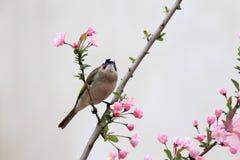 Птица ест листья цветков стоковая фотография rf