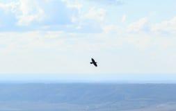 Птица летая над горами стоковые изображения rf