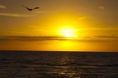 Птица летая над морем во время захода солнца Стоковое Изображение