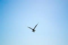 Птица летая небо Стоковое Фото