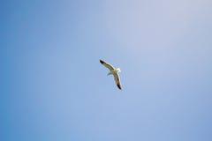Птица летая небо Стоковые Фотографии RF