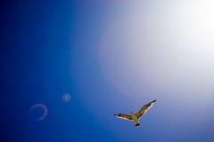 Птица летая небо Стоковая Фотография RF