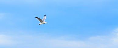 птица летая чисто небо чайки стоковые изображения rf