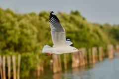 птица летая чисто небо чайки Стоковая Фотография