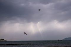птица летая чисто небо чайки стоковая фотография rf