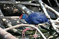Птица заболоченных мест Стоковые Изображения