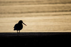 Птица захода солнца Стоковые Изображения RF