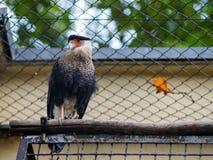 Птица за загородкой смотря камеру Стоковая Фотография