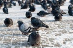 Птица зимы Стоковая Фотография