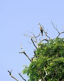 Птица змейки в деревьях Стоковые Изображения