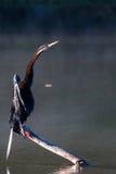 Птица змейки на ручке Стоковая Фотография RF