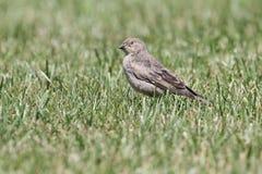 Птица зомби Стоковая Фотография RF