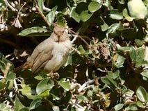Птица зяблика Стоковая Фотография RF