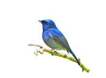 Птица изолированная на белой предпосылке Стоковое Изображение RF
