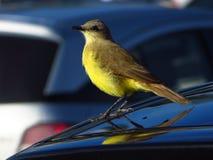 Птица и большой город Стоковое Изображение RF