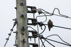 Птица и линия и электричество Eletricity столб Стоковое фото RF