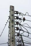 Птица и линия и электричество Eletricity столб Стоковые Изображения RF