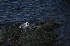 Птица и добыча Стоковые Изображения RF