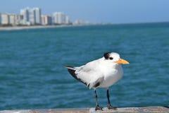 Птица и океан воды Стоковые Фотографии RF