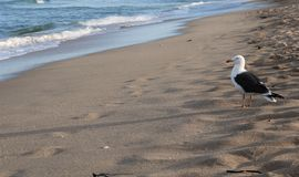 Птица и океан Стоковые Фото