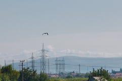 Птица и опоры линии электропередач Стоковые Фотографии RF