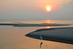 Птица и отражение берега на океане Стоковые Изображения RF