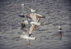 Птица и река Стоковое Изображение RF