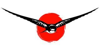 Птица и солнце ласточки Стоковая Фотография