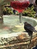 Птица и фонтан Стоковые Фото
