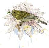 Птица и цветок Стоковая Фотография RF