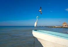 Птица и шлюпка цапли острова Holbox в пляже Стоковое фото RF
