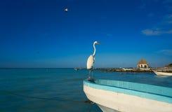 Птица и шлюпка цапли острова Holbox в пляже Стоковые Фотографии RF