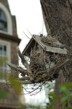 птица корона del дом mar стоковое фото rf