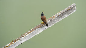 Птица, который держат на старой древесине Стоковое Фото