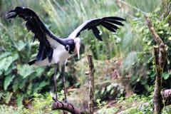 Птица крана фауны стоковая фотография