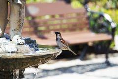 Птица купая в фонтане Стоковые Фотографии RF
