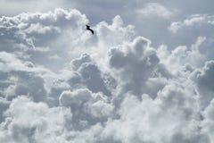 Птица летает вокруг и вокруг в облачное небо стоковые изображения rf