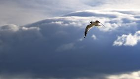 Птица летая и смотря вниз с готового для того чтобы нырнуть стоковые фотографии rf